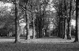 Oak_Alley_bw_2000.jpg.jpg