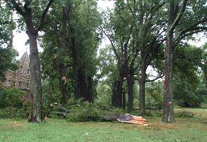Wind_storm_damage_20030722_001.jpg.jpg