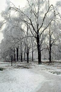 snow_oak_alley_1994_002.jpg.jpg