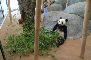 Pandas_20030519_trustee_spouse_tour_zoo_Jaslow (2).JPG.jpg