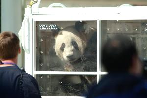 Pandas_travel_compartment_20030407_04.jpg.jpg