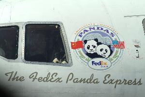 Panda_logo_on_airplane_20030407_002.jpg.jpg