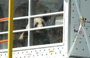 Pandas_travel_compartment_20030407_05.jpg.jpg