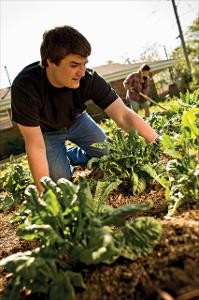 Community_Gardens_Volunteer_2011_001.jpg.jpg
