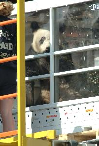 Pandas_travel_compartment_20030407_03.jpg.jpg