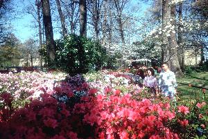 flowers_Trees_Peoples_4.jpg.jpg