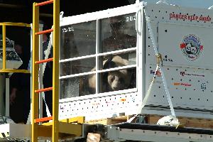 Pandas_travel_compartment_20030407_01.jpg.jpg